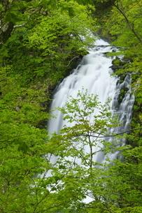 知床 新緑の熊越の滝の写真素材 [FYI04764737]