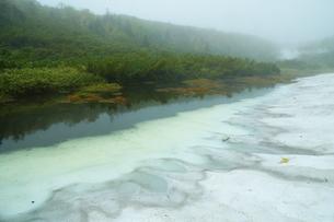 羅臼湖付近の新緑と残雪の森の写真素材 [FYI04764747]