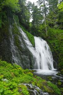 雄鹿の滝とエゾノリュウキンカの写真素材 [FYI04764749]