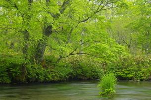 新緑の西別川源流の写真素材 [FYI04764750]