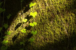 阿蘇の森の写真素材 [FYI04764751]