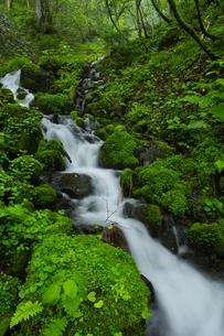 ウペペサンケ山麓 初夏の糠平川源流の沢の写真素材 [FYI04764824]