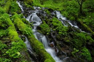 ウペペサンケ山麓 初夏の糠平川源流の沢の写真素材 [FYI04764825]