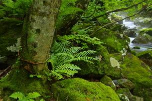 猿留川上流 初夏の森の写真素材 [FYI04764833]