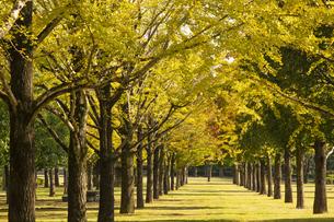 秋の熊本テクノリサーチパークの写真素材 [FYI04764834]