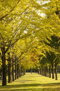 秋の熊本テクノリサーチパークの写真素材 [FYI04764835]