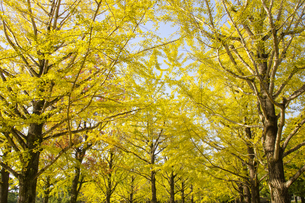 秋の熊本テクノリサーチパークの写真素材 [FYI04764836]