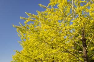 秋の熊本テクノリサーチパークの写真素材 [FYI04764837]