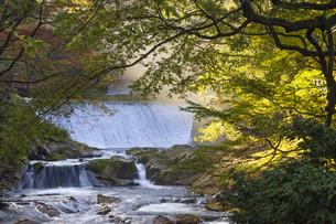 秋の菊池渓谷の写真素材 [FYI04764847]