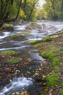 秋の菊池渓谷の写真素材 [FYI04764849]