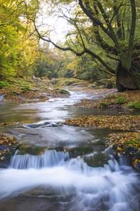 秋の菊池渓谷の写真素材 [FYI04764850]