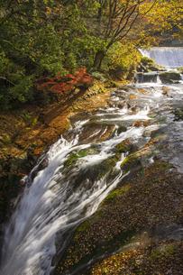秋の菊池渓谷の写真素材 [FYI04764852]