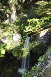 大滝神社の湧水の写真素材 [FYI04764899]