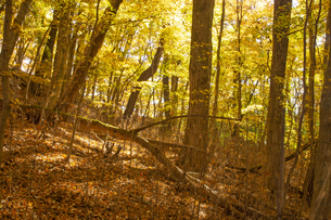 秋の阿蘇清流の森の写真素材 [FYI04764953]