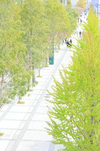 新緑の街路樹の写真素材 [FYI04765028]