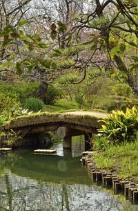 向島百花園・池に架かる橋の写真素材 [FYI04765035]