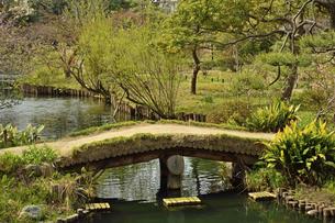 向島百花園・池に架かる橋の写真素材 [FYI04765036]