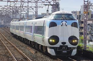 阪和線の特急パンダくろしおの写真素材 [FYI04765298]