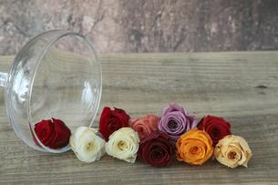 カクテルグラスと薔薇の花首の写真素材 [FYI04765376]