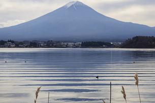 河口湖から見た富士山と湖面に筋状に映る富士山の写真素材 [FYI04765384]