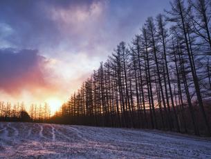 朝焼けと防風林の写真素材 [FYI04765399]