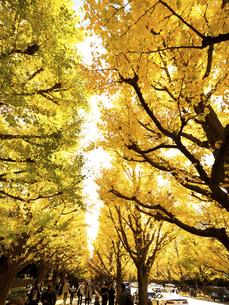 東京都 神宮外苑のイチョウ並木の写真素材 [FYI04765715]
