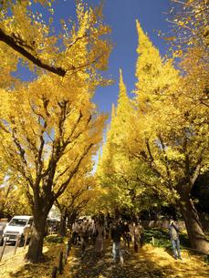 東京都 神宮外苑のイチョウ並木の写真素材 [FYI04765722]