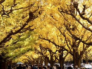 東京都 神宮外苑のイチョウ並木の写真素材 [FYI04765732]