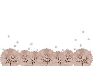 横並びの桜の木 花びら 水彩 白バックのイラスト素材 [FYI04765763]