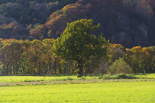 秋の牧草地と一本の木の写真素材 [FYI04765788]