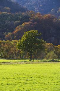 秋の牧草地と一本の木の写真素材 [FYI04765790]