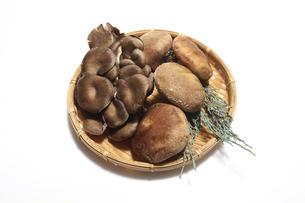 笊に盛った平茸と椎茸の写真素材 [FYI04765941]