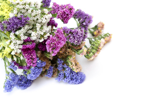 スターチスの花束の写真素材 [FYI04765944]