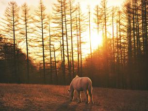 朝日と白馬の写真素材 [FYI04765951]