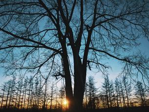 冬の風景の写真素材 [FYI04765952]