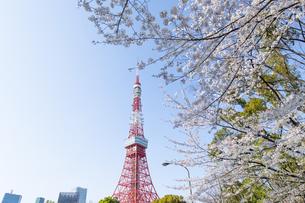 さくらと東京タワーの写真素材 [FYI04766018]