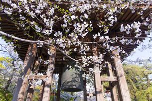桜と鐘の写真素材 [FYI04766021]