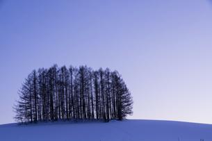 雪の夕暮れの丘のカラマツ林の写真素材 [FYI04766030]