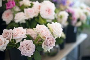 花屋に並んでいるバラの写真素材 [FYI04766108]