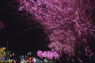 茨城県、水と緑のふれあい公園のイルミネーションの写真素材 [FYI04766164]