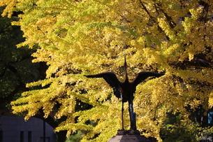 イチョうの黄葉 雲形池の写真素材 [FYI04766234]