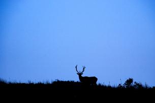鹿のシルエットの写真素材 [FYI04766457]