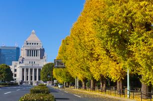 国会議事堂と銀杏並木の写真素材 [FYI04766482]