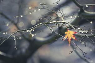 冬の始まりの写真素材 [FYI04766546]