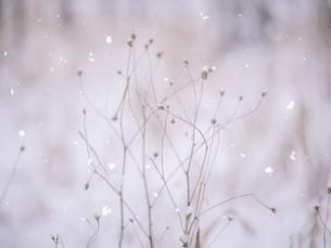 冬の風景の写真素材 [FYI04766564]