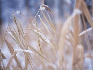 冬の風景の写真素材 [FYI04766565]