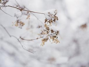 冬の風景の写真素材 [FYI04766567]