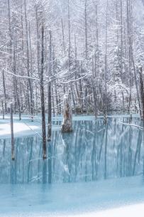 冬の青い池の写真素材 [FYI04766641]