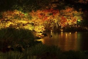 【香川県 高松市】秋の夜間ライトアップの栗林公園 日本庭園の写真素材 [FYI04766642]