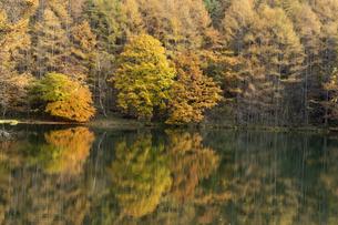 晩秋の御射鹿池の写真素材 [FYI04766726]